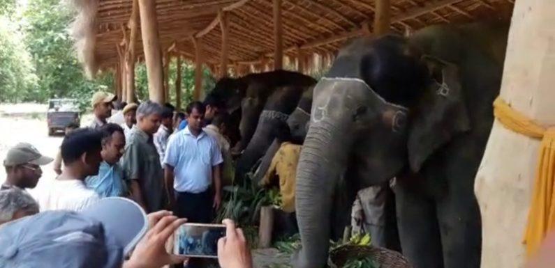 दुधवा टाइगर रिजर्व में हाथियों की हुई हैप्पीनेस पार्टी