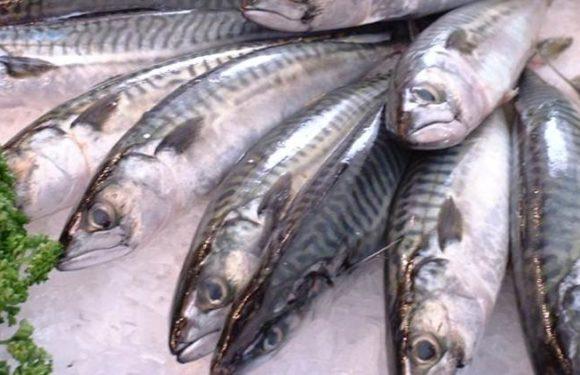 मछली खाने से रहे सावधान, कैंसर का हो सकता है खतरा