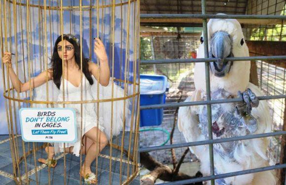 पक्षियों के प्रति जागरुकता के लिए पिंजरों में कैद पंक्षियों की तरह PETA के लोग करेंगे प्रदर्शन