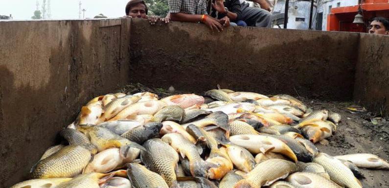 दधीचि कुण्ड की हजारों मछलियों की मौत,अधिशाषी अधिकारी की घोर लापरवाही उजागर