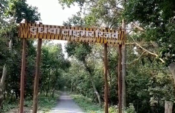 दुधवा नेशनल पार्क-ऑर्गेनों फास्फेट जहर से बाघों को निशाना बना रहे शिकारी