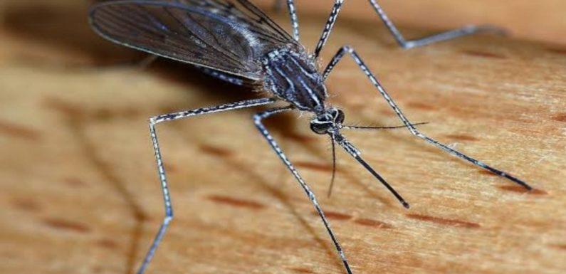 मलेरिया एवं नगर पालिका स्वास्थ महकमा सो रहा,मच्छरों ने मचाया आतंक,कागजों पर हो रही फॉगिंग !