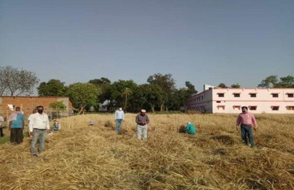 कृषि विज्ञान केंद्र ने बताया, फसल कटाई में कोरोना से बचकर कैसे करें काम