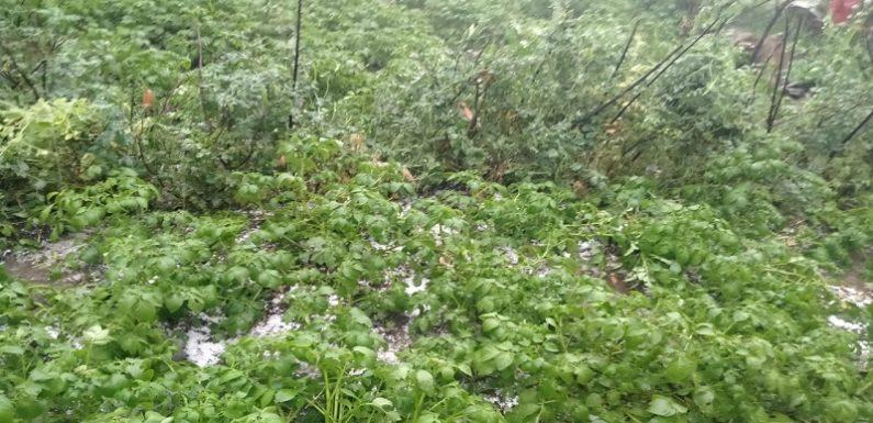 चमोली के पोखरी ब्लाक के गांवों में आफत के ओले, लाखों की फसल बर्बाद
