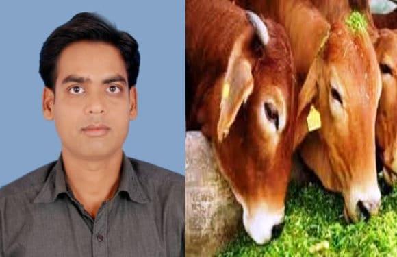 यूरिया उपचारित चारे को पशु आहार में सम्मलित कर पशुपालक प्राप्त करें अधिक लाभ : डॉ विवेक