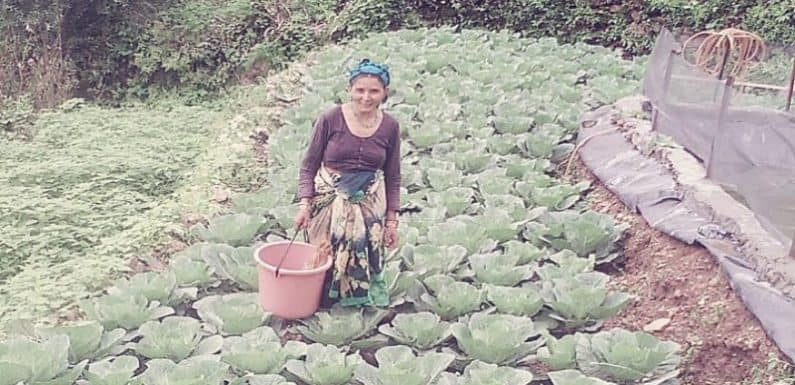 लाॅकडाऊन में महिला ने सब्जी उत्पादन को बनाया आजीविका का साधन