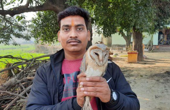 गोरखपुर : ग्राम जंगल दीर्घनसिंह में मिला दुर्लभ प्रजाति का सफेद उल्लू
