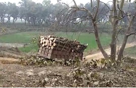 सिद्धार्थनगर : जिले में सेमर और भिलोर के पेड़ों की कटान जोरो पर