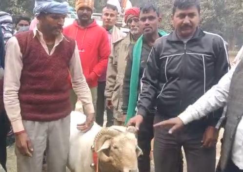सिद्धार्थनगर : मकरसंक्रांति के अवसर पर कराई गयी भेड़ प्रेतियोगिता