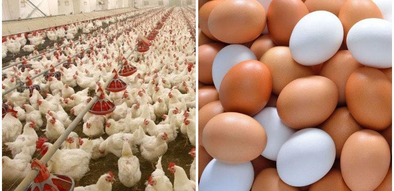 कानपुर : बर्ड फ्लू के चलते अंडा और मीट की बिक्री पर रोक