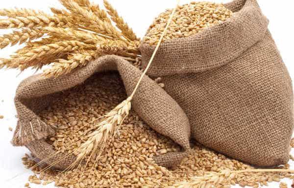 सीएम योगी ने गेहूं की नई MSP की जारी, किसानों को मिलेगा फायदा
