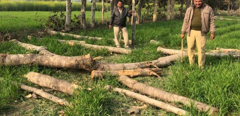 मरूई गांव में बिना परमिट काटे गए सैकड़ों पेड़, वन क्षेत्राधिकारी ने शुरू की जांच