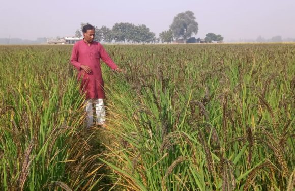 कालानमक चावल एवं बीज उत्पादक के रूप में जाना जाएगा श्री गोरखनाथ कृषक मलउर उत्पादक संगठन: डॉ. विवेक