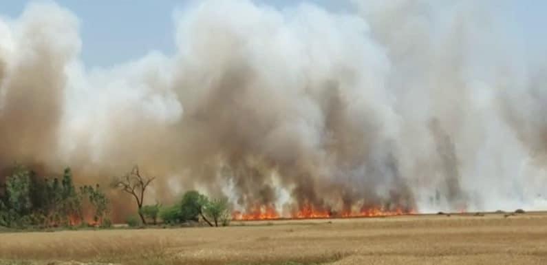 जलती रही गेहूं की फसल, घंटों तक नहीं पहुंचा फायर ब्रिगेड