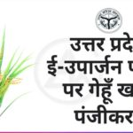 rabi crop