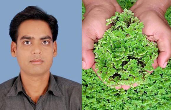 पशुओ को अजोला खिलाये और अच्छा मुनाफा पाये: डॉ विवेक प्रताप