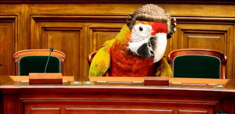 इतिहास में पहली बार तोते ने दी कोर्ट में रेप केस की गवाही